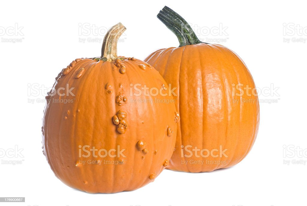 Two Pumpkins Isolated on White stock photo