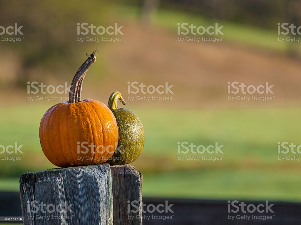 Two Pumpkins on an Old Fence Posts in Vermont stock photo