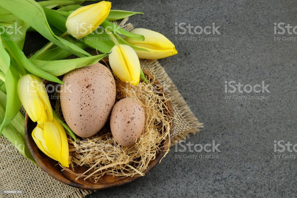 Two quail easter eggs and yellow tulips on dark background. stock photo