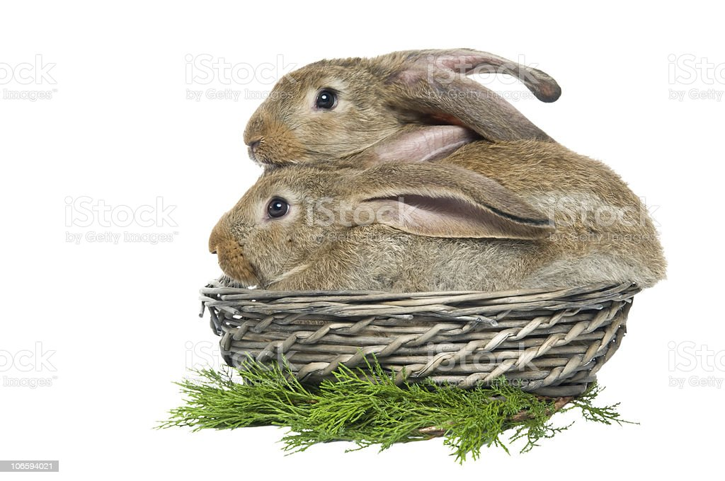two rabbits in a basket and vegetables stock photo