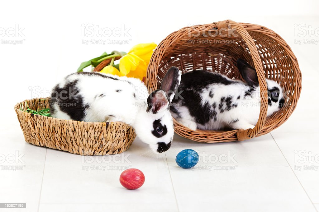 Two rabbits in baskets with colorful Easter eggs and tulips royalty-free stock photo