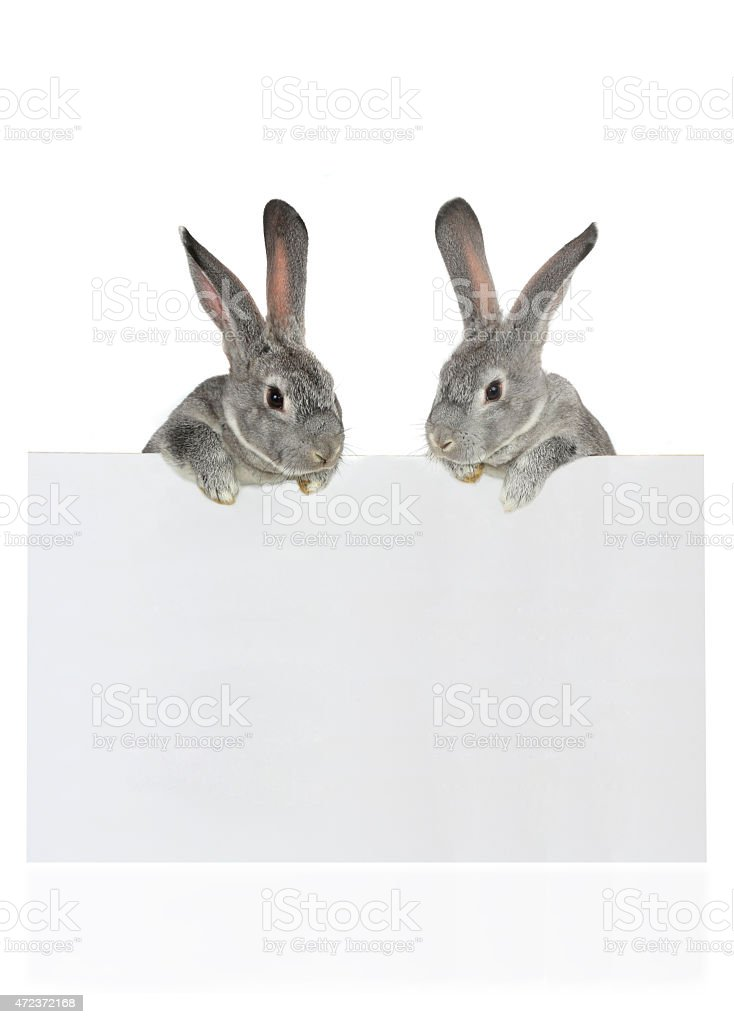 Two Rabbits stock photo