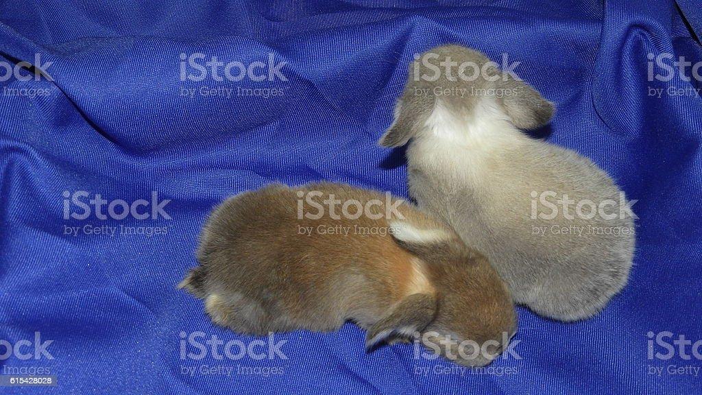 Two Rabits stock photo