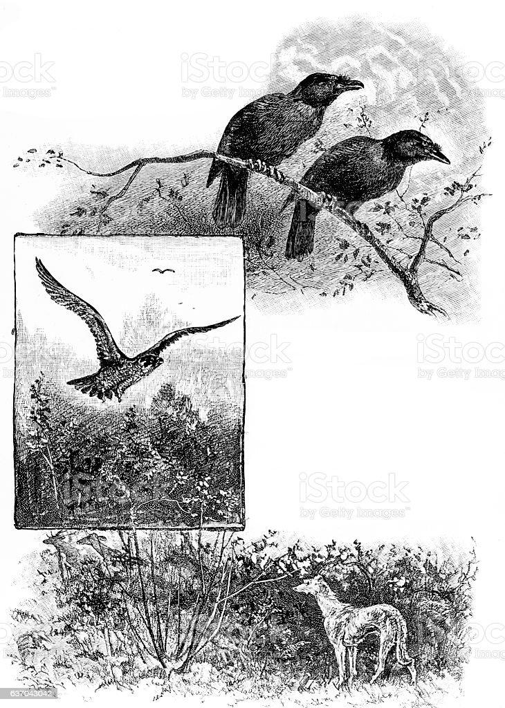 Two ravens, eagle, greyhound nature frame stock photo
