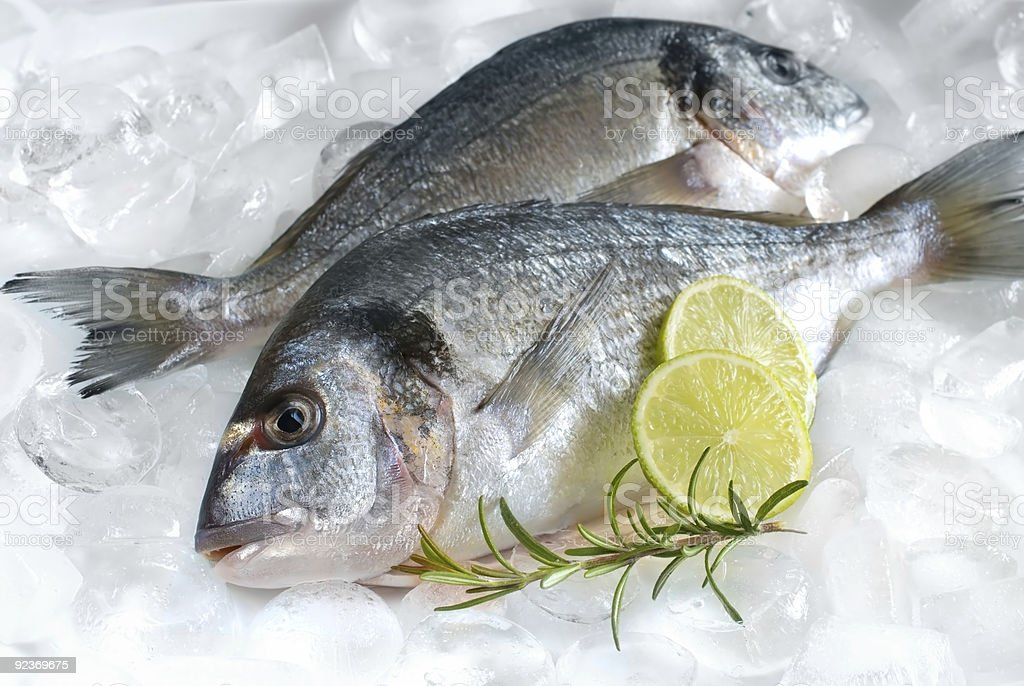 Two raw gilthead fish with rosemary sprig and lime on ice royalty-free stock photo