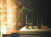Two real plants in glass vases for decoration