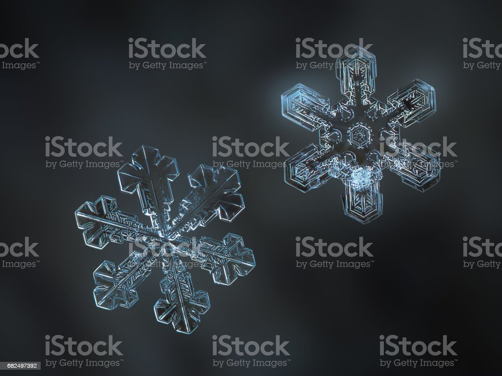Two real snowflakes glittering on dark blur background stock photo