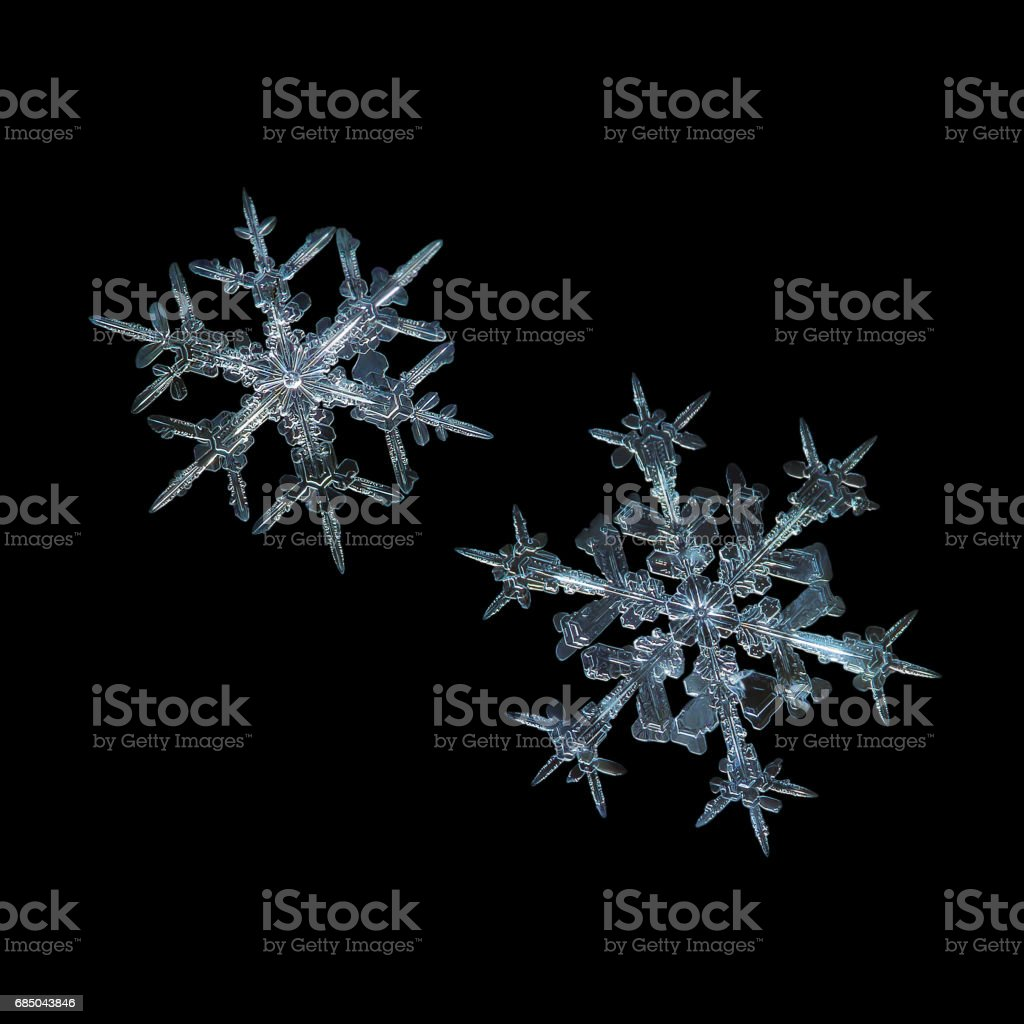 Two real snowflakes isolated on black background stock photo