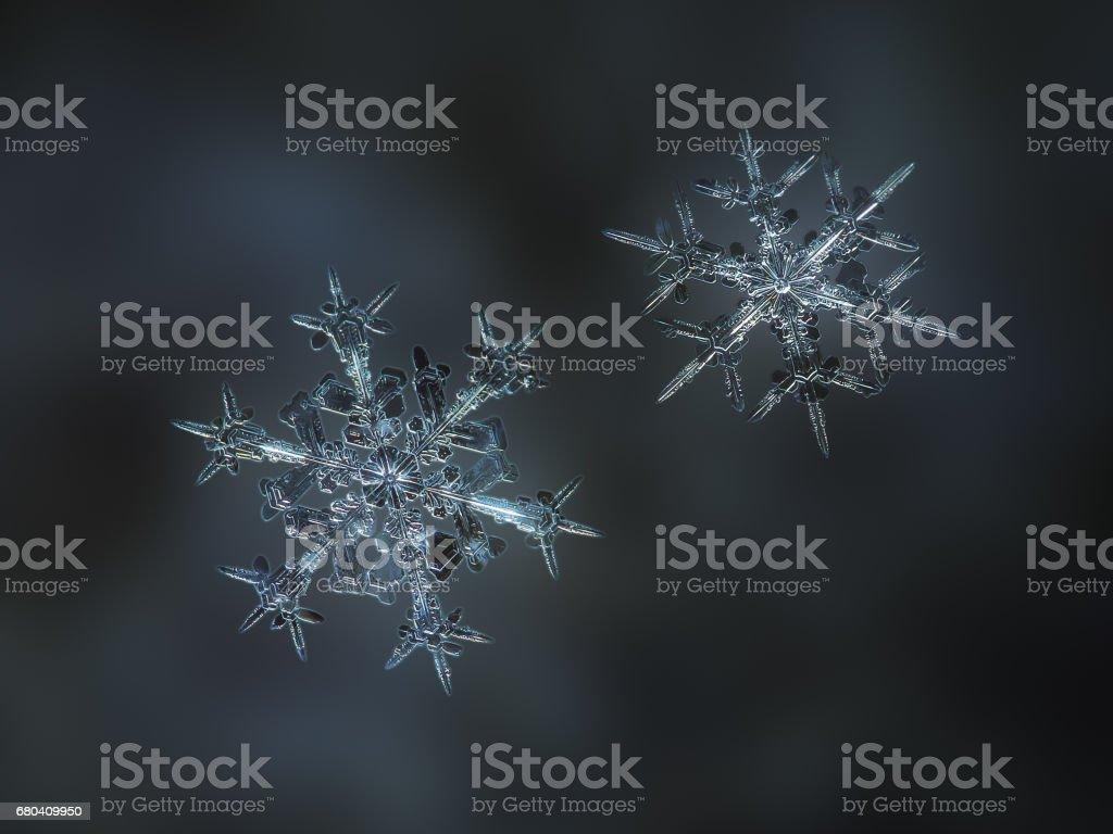 Two real snowflakes sparkling on dark blur background stock photo