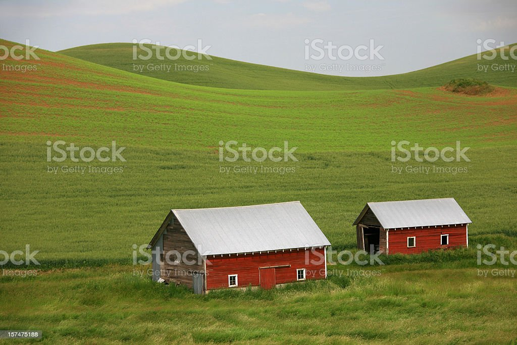 Two Red Barns royalty-free stock photo