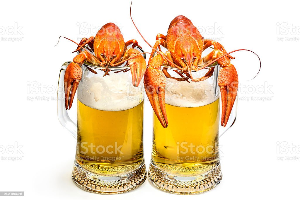 Two red boiled lobsters on the mugs of beer stock photo