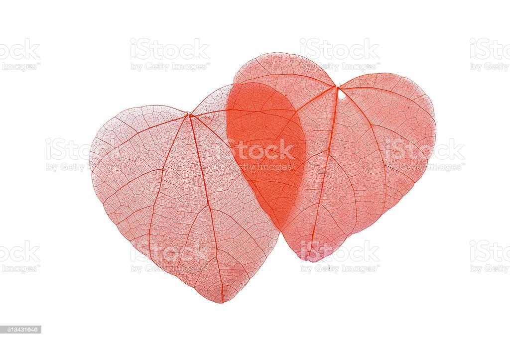 Two red heart shaped skeleton leaves on white royalty-free stock photo
