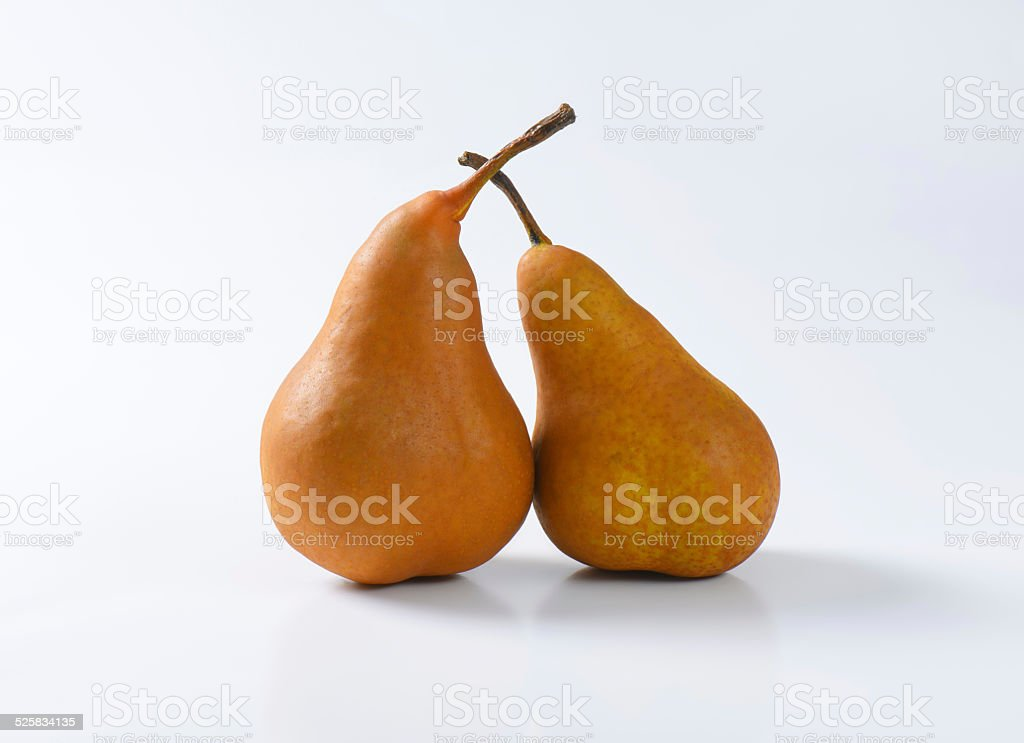 Two ripe Bosc pears stock photo