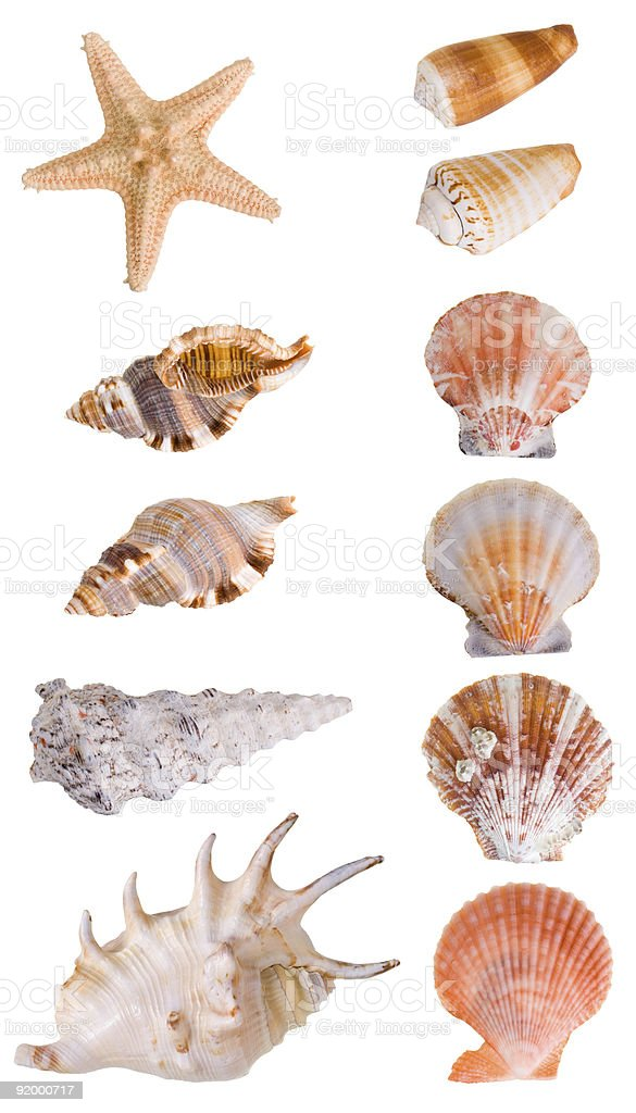 Two rows of a collection of seashells stock photo