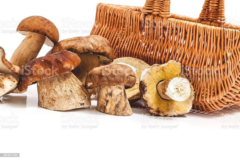 Two rows of fresh mushrooms gathered in front of the stock photo