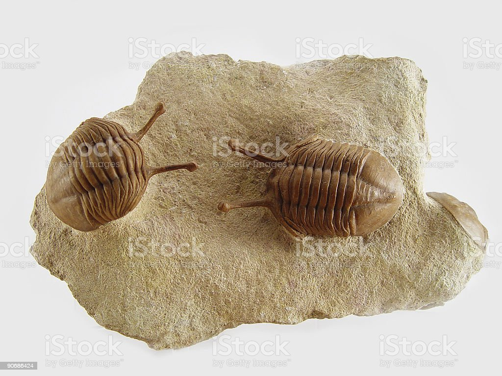 Two Russian Trilobites stock photo