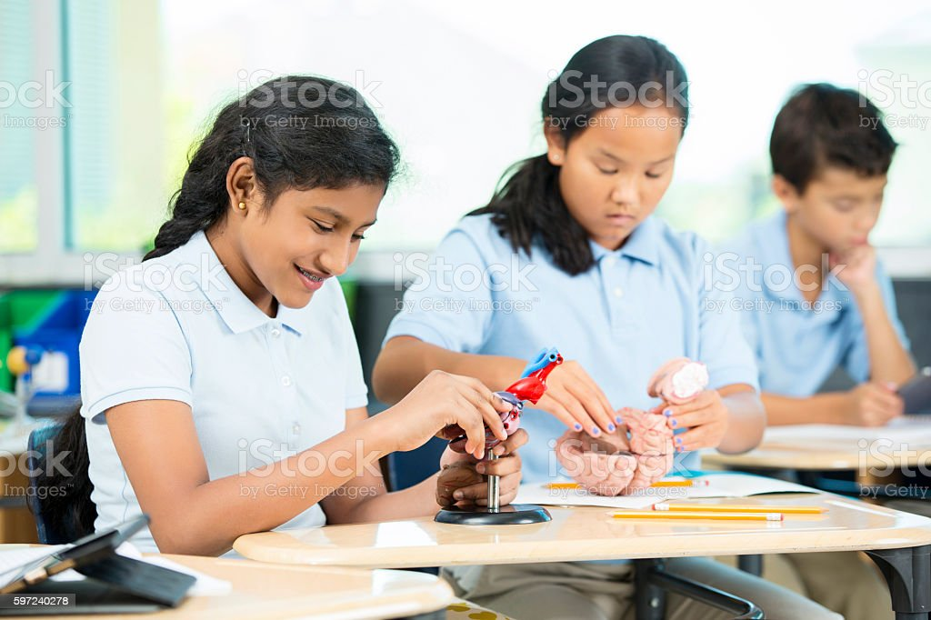 Two school age girls work on biology models in class stock photo