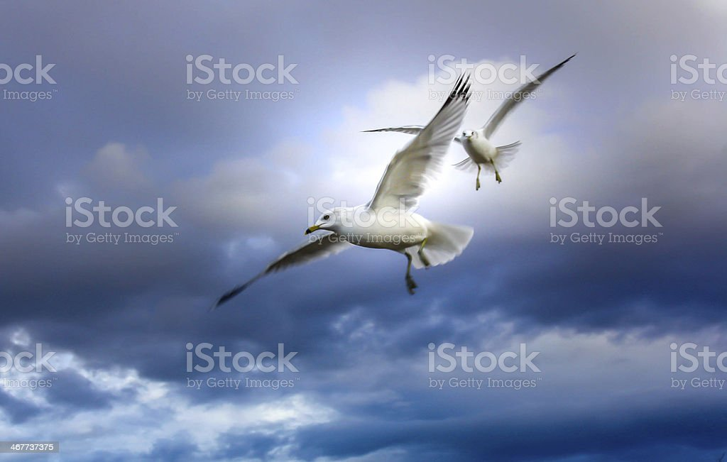 Two seabirds royalty-free stock photo