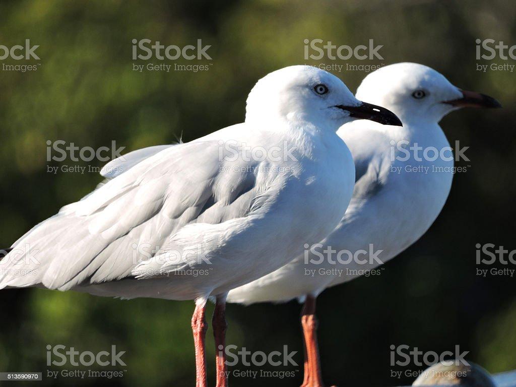 Two Seagulls and bokeh stock photo