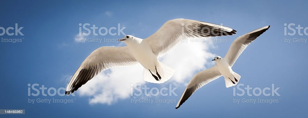 two seagulls are flying royalty-free stock photo