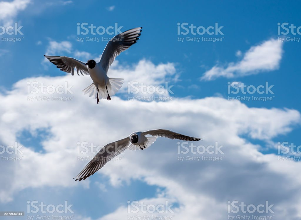 Two Seagulls Flying in a Beautiful Sky stock photo