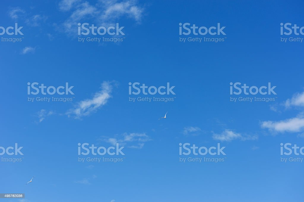 Two seagulls flying to the high place against clear sky stock photo