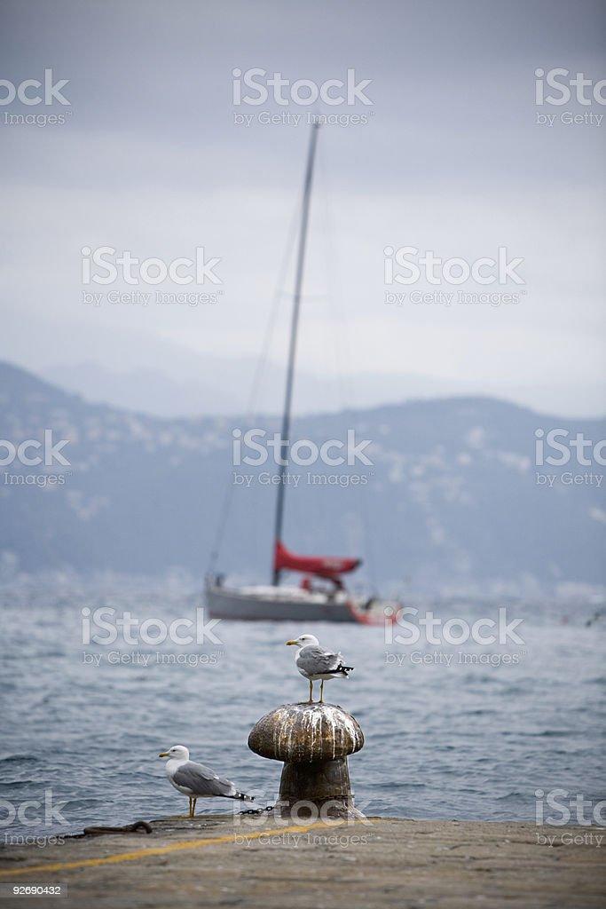 Two Seagulls on a Portofino Pier stock photo