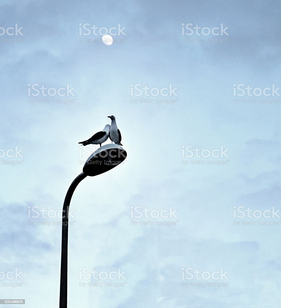 Two seagulls on lampost in moonlight stock photo