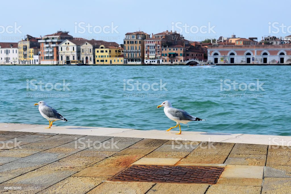 Two seagulls on the Giudecca canal, Venice stock photo