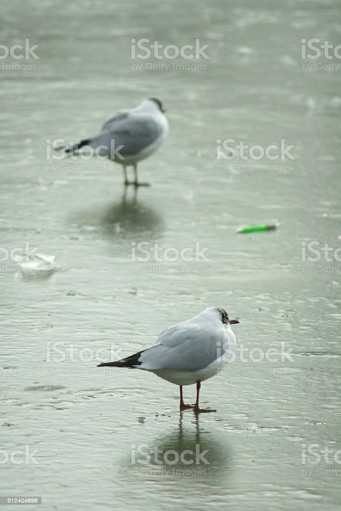Two seagulls on winter stock photo
