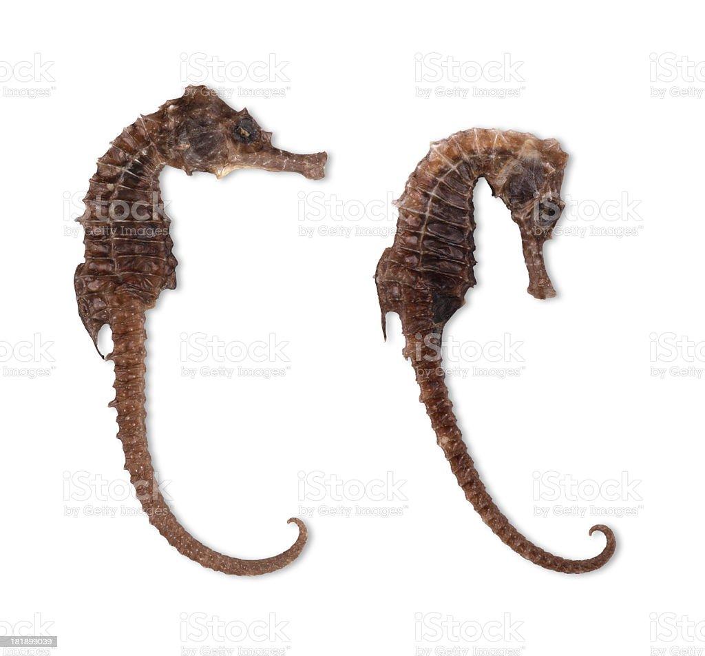 Two Seahorse stock photo
