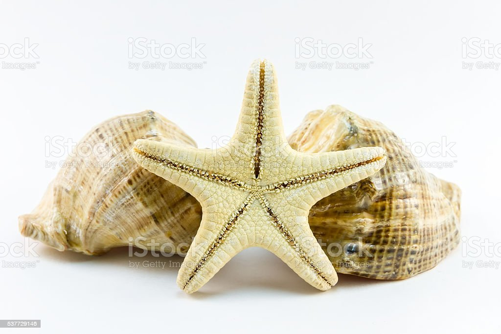 Two seashells and starfish on white background stock photo