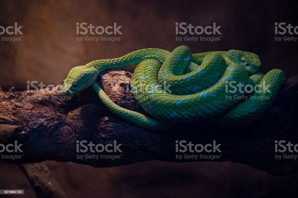 Two Serpents stock photo