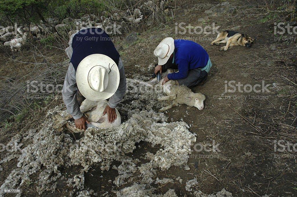Два овец длиннозабойных выемочных комбайнов Стоковые фото Стоковая фотография