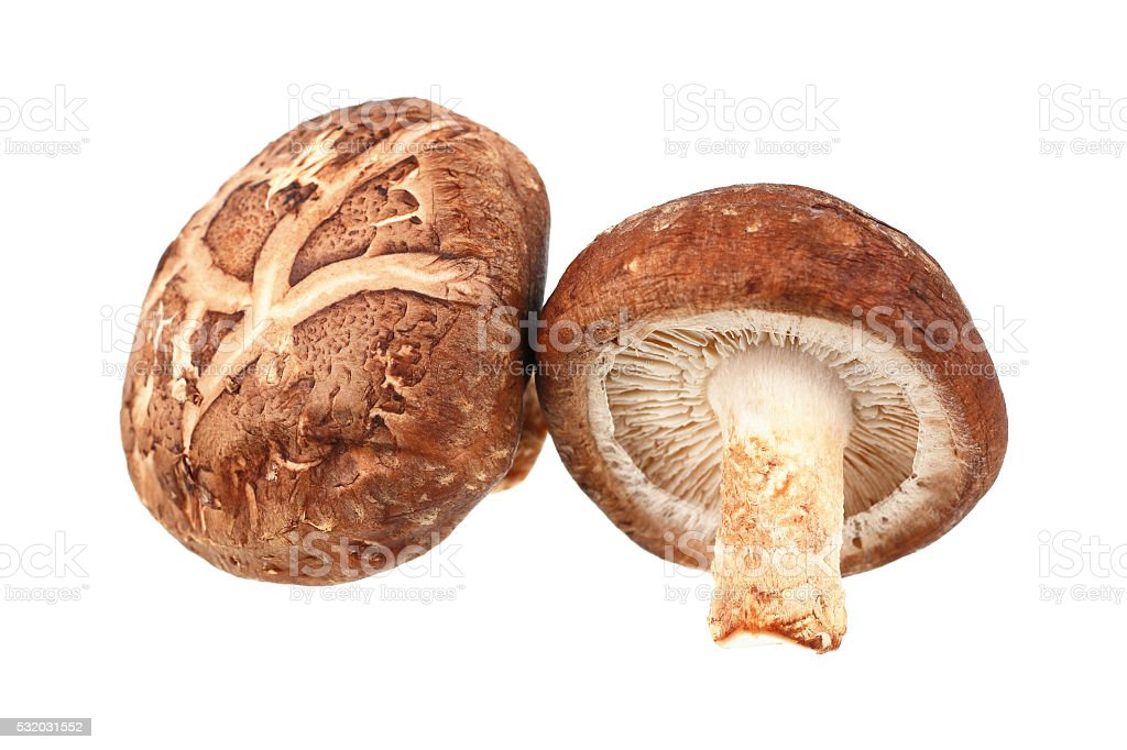 Two Shiitake mushrooms isolated on white stock photo