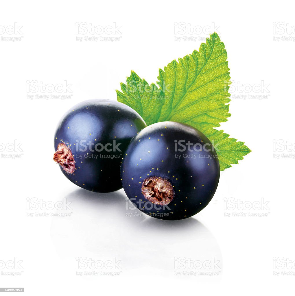 Two shiny black currants with a green leaf isolated on white stock photo