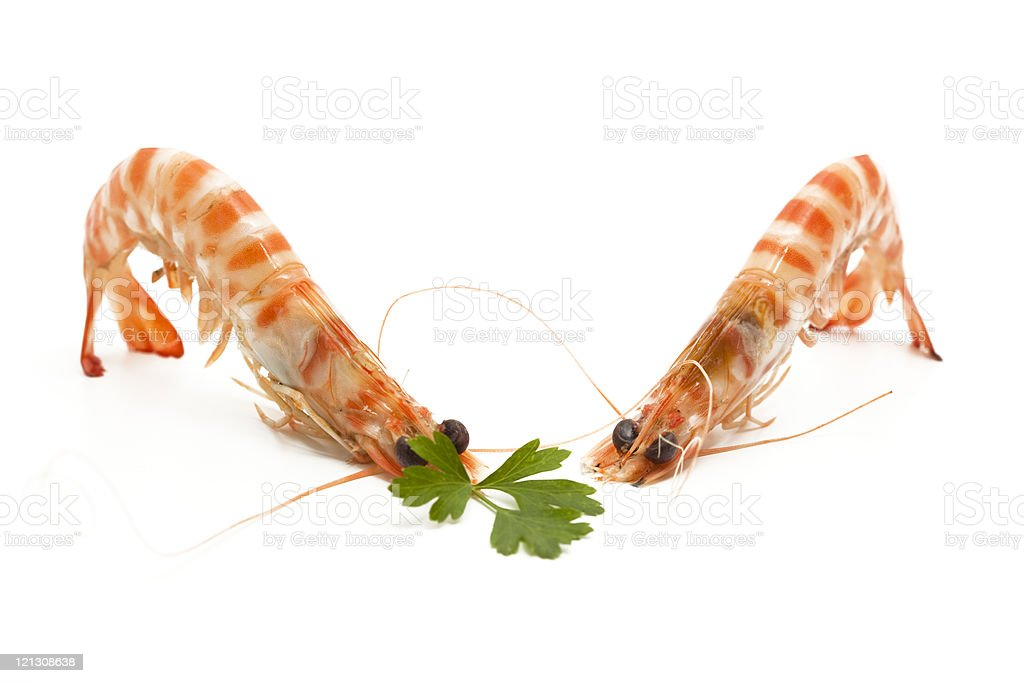 two shrimps stock photo