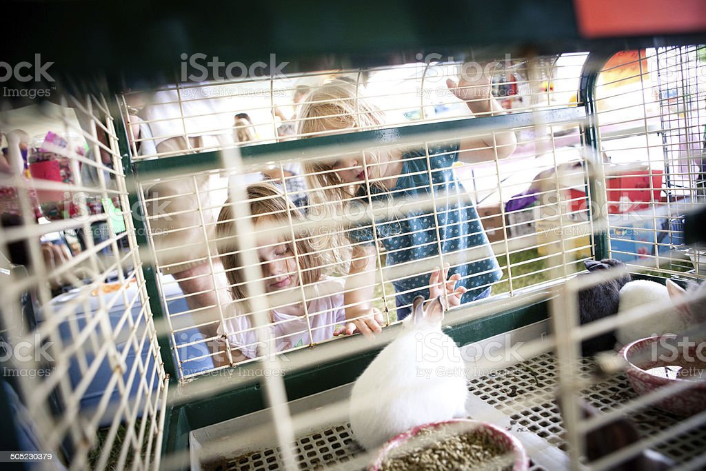 Two Sisters Observing Rabbits at Agricultural Fair royalty-free stock photo
