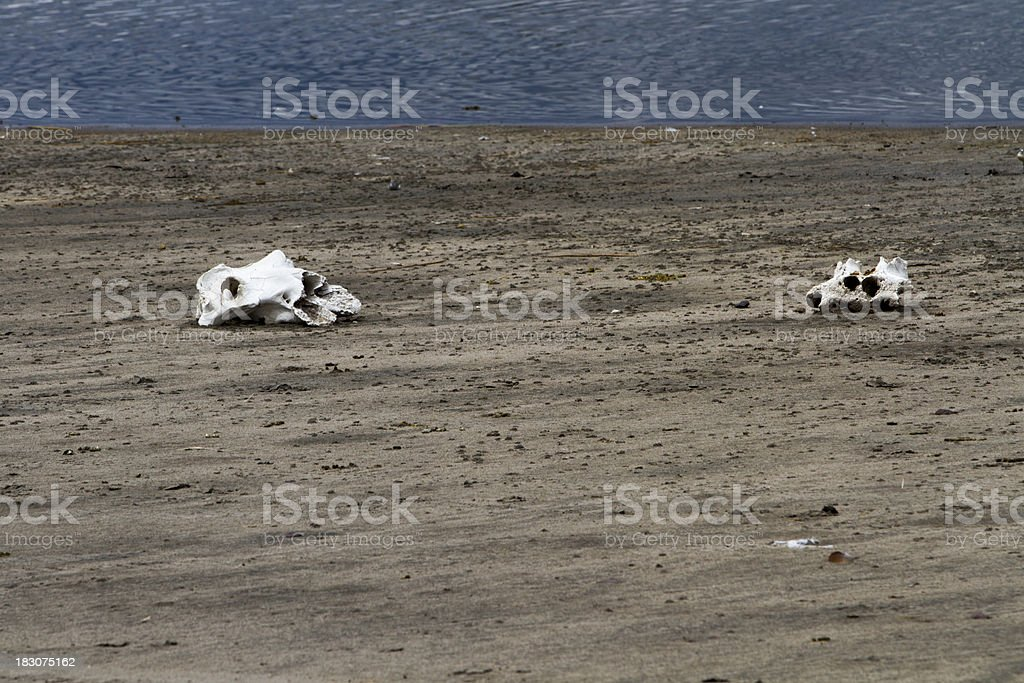 Two skulls by a lake stock photo