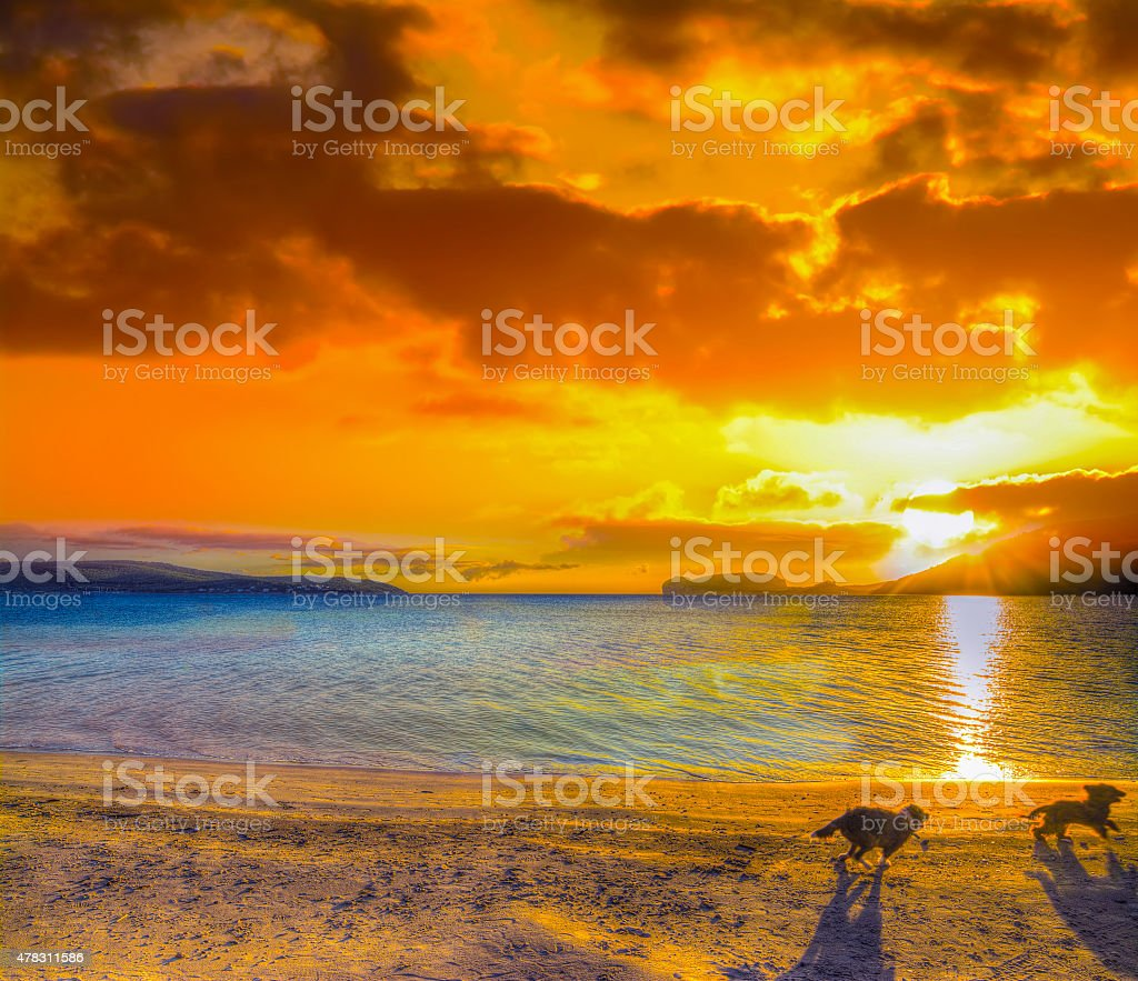 two small dogs running on the beach at sunset stock photo