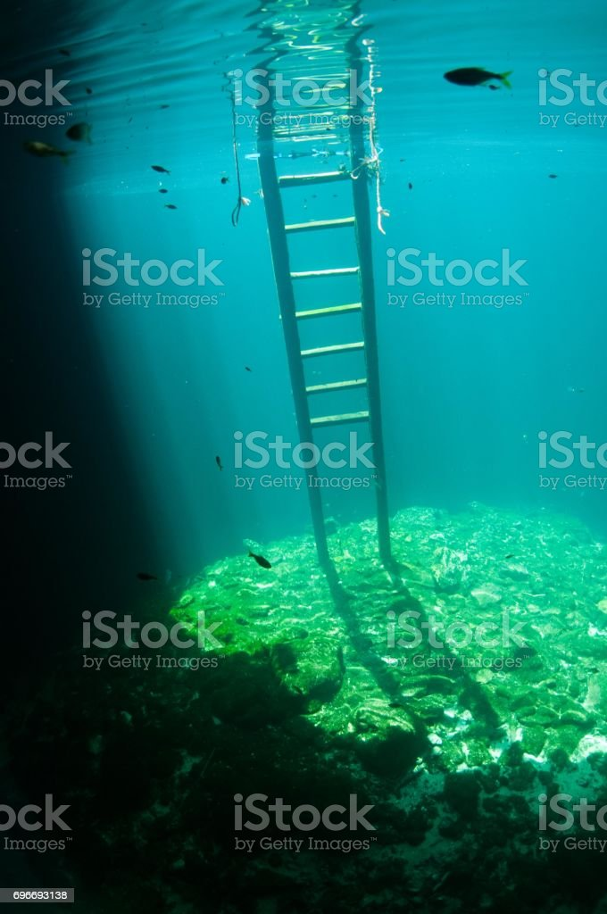 two small fish in water at entrance to cavern dive cenotes with ladder clear blue light stock photo