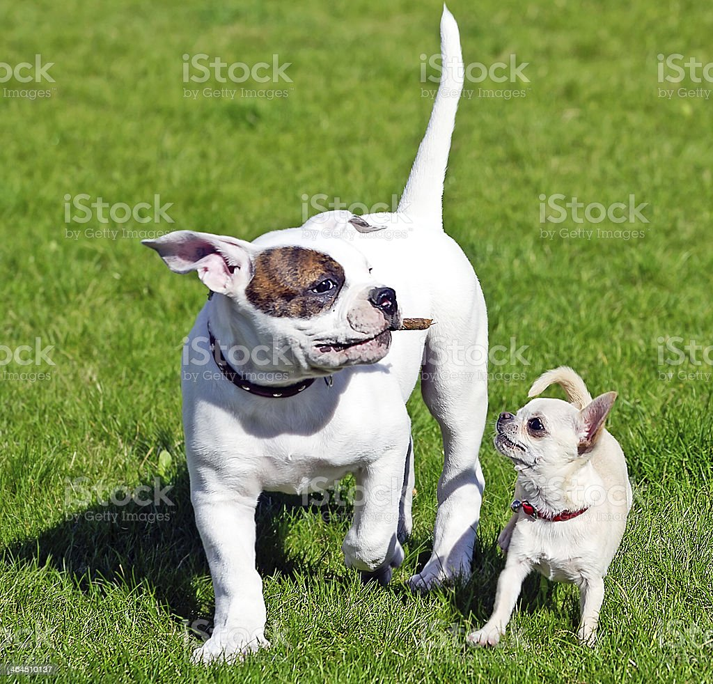 two small happy puppies royalty-free stock photo