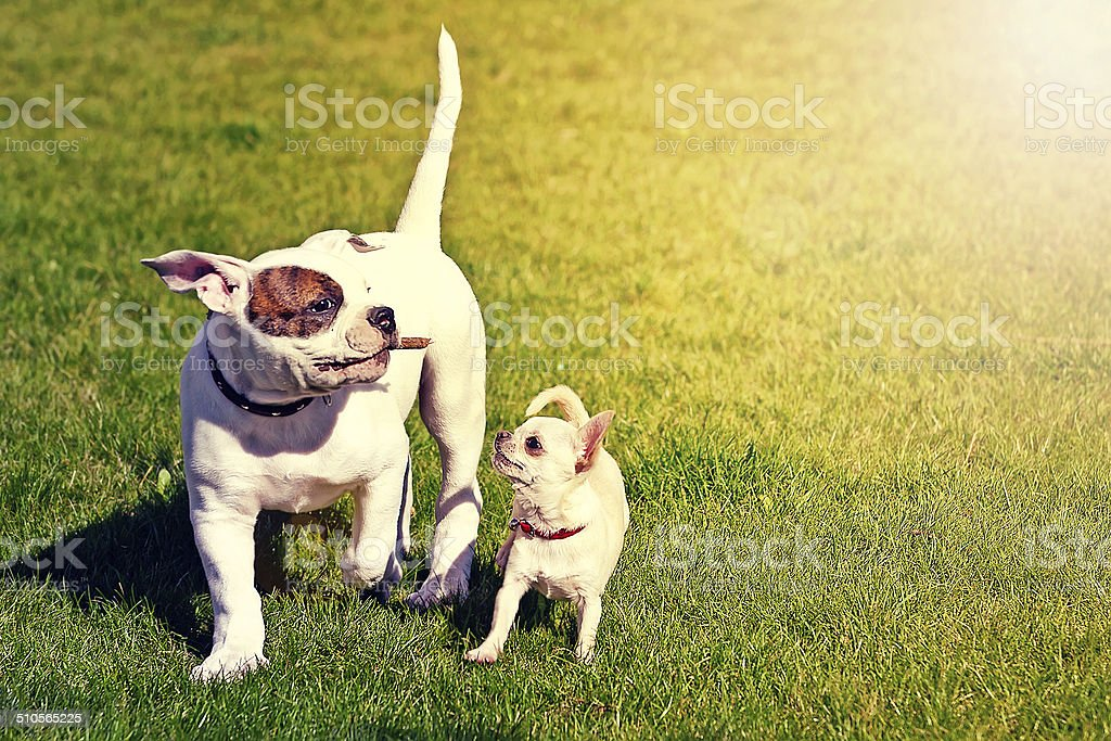 two small happy puppies stock photo