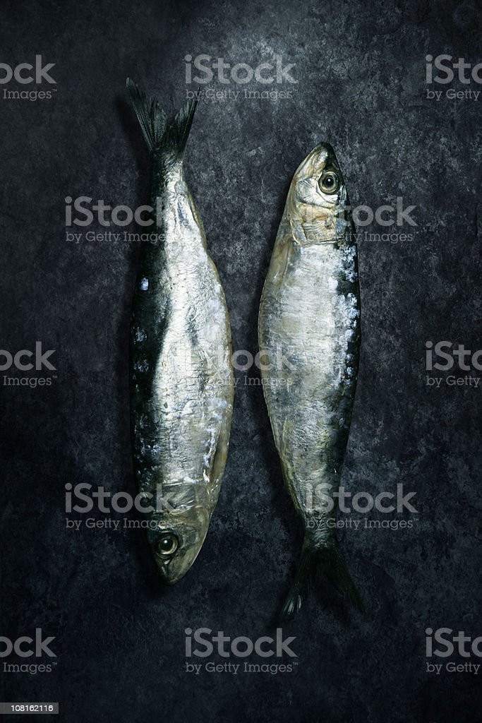Two Small Herring Fish Lying on Grunge Background royalty-free stock photo