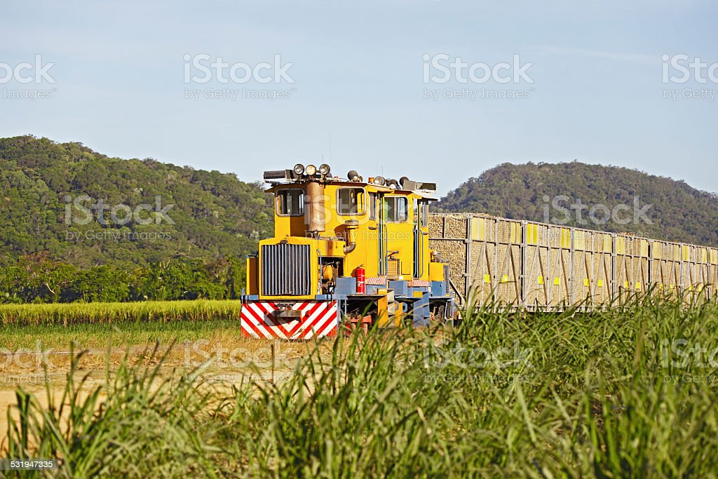 Two small locomotives with loaded bins in sugar cane plantation stock photo