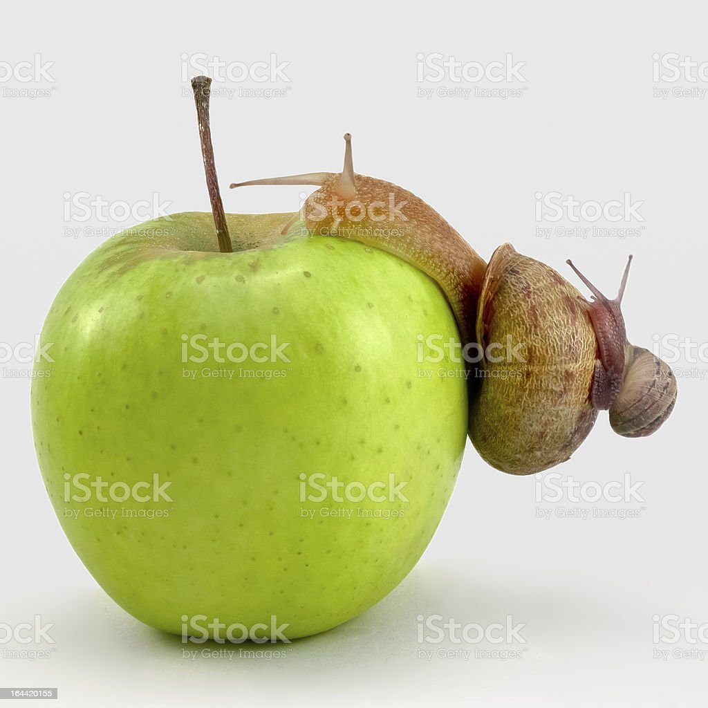 two snails on an apple royalty-free stock photo