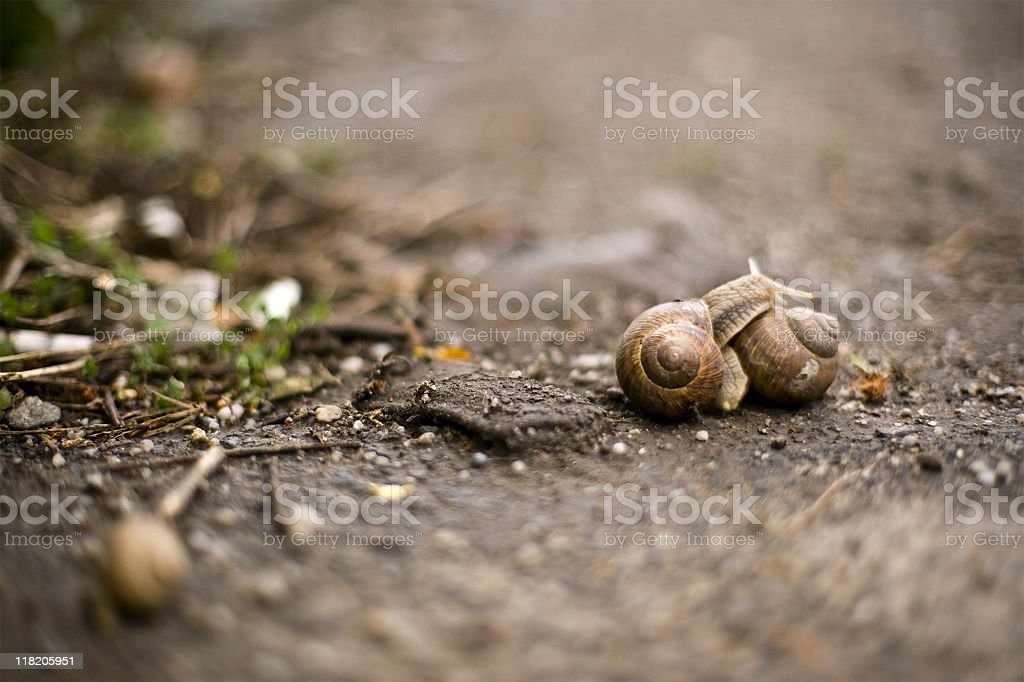Two snails royalty-free stock photo