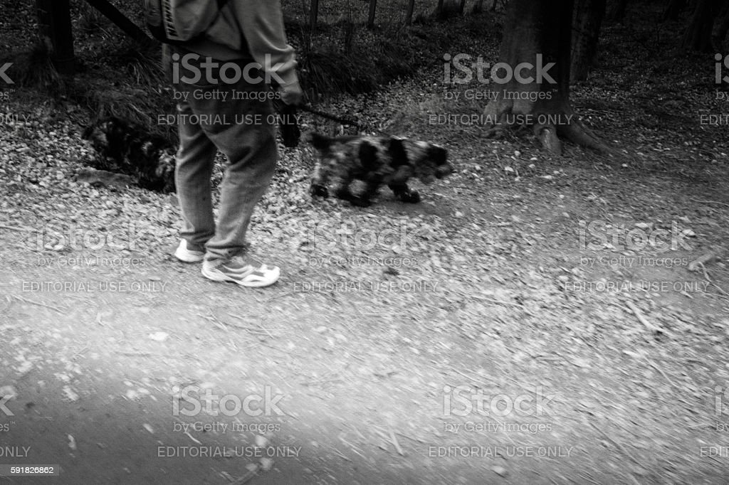 Two Spaniels stock photo