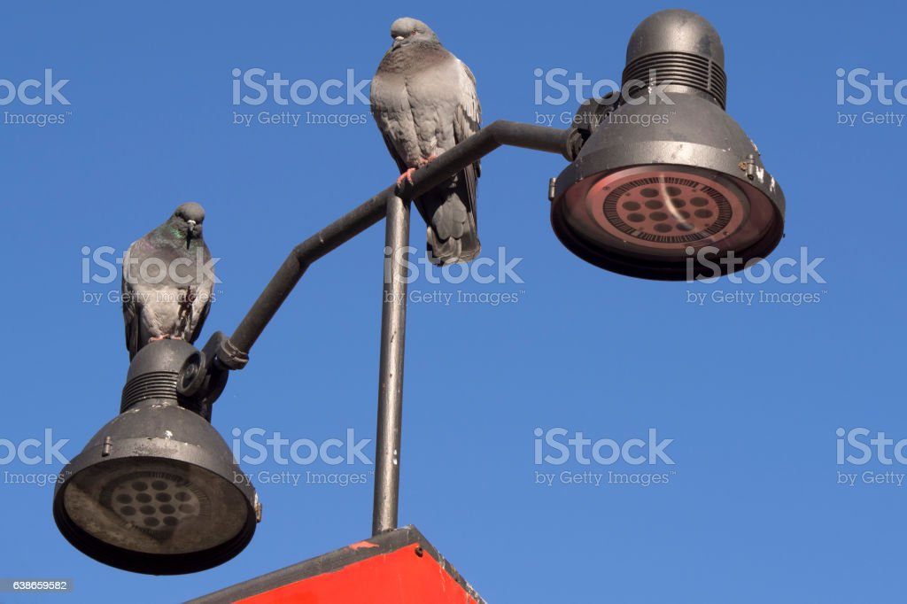Two standing pigeons stock photo