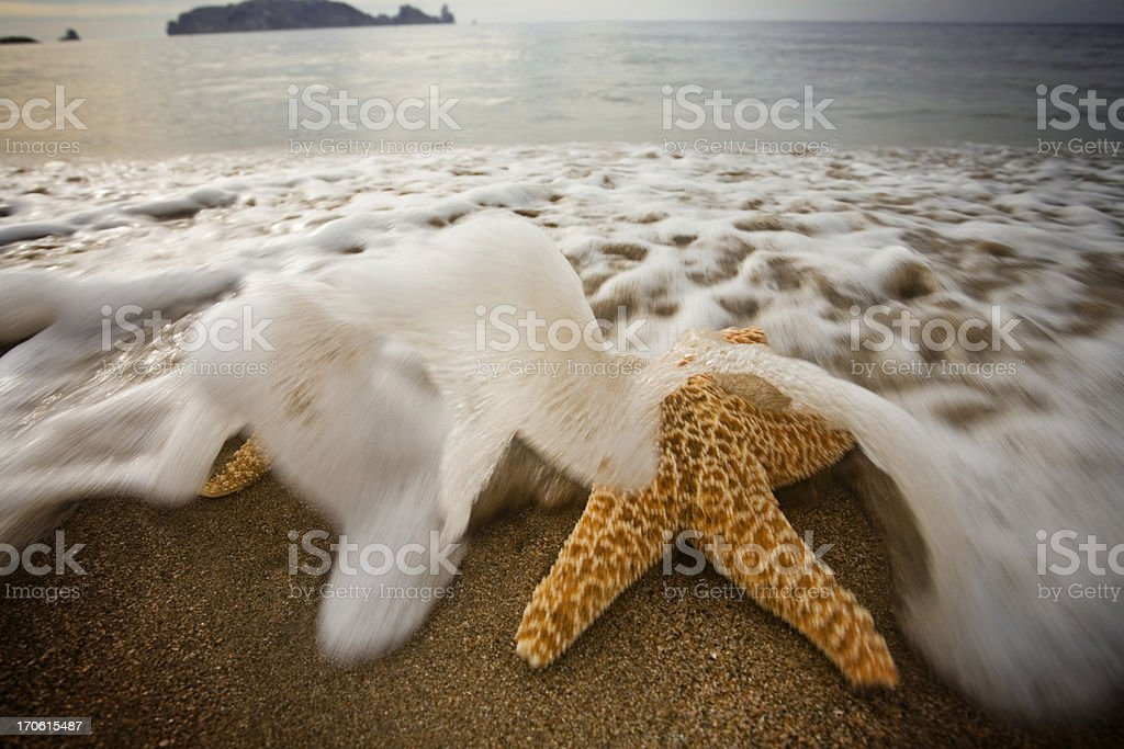 Two starfish get plunged by a big wave stock photo